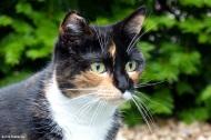 Our Cat Sayuri